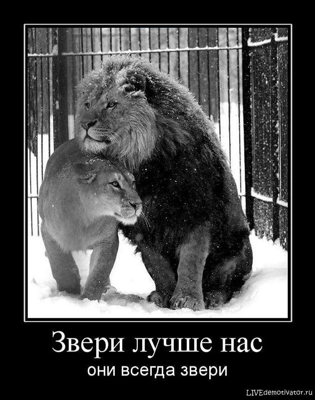 Звери лучше нас - они всегда звери