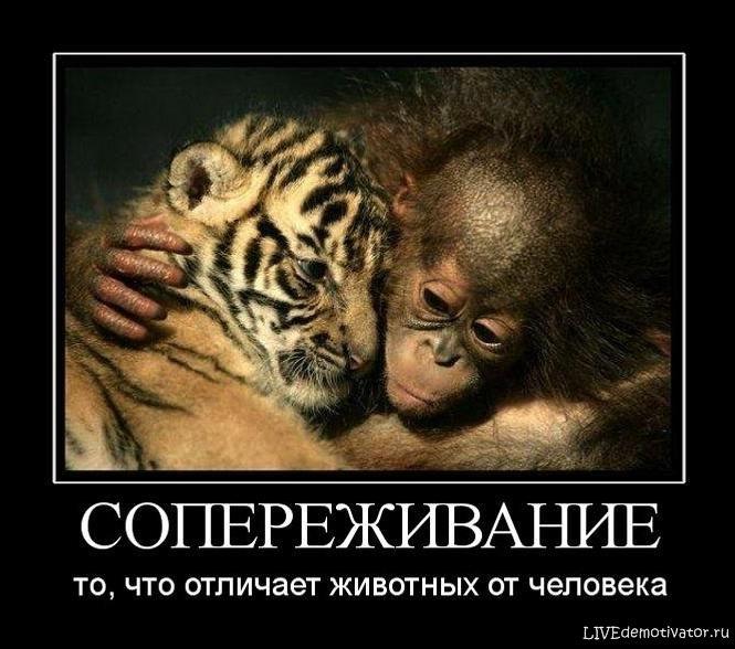 СОПЕРЕЖИВАНИЕ - то, что отличает животных от человека