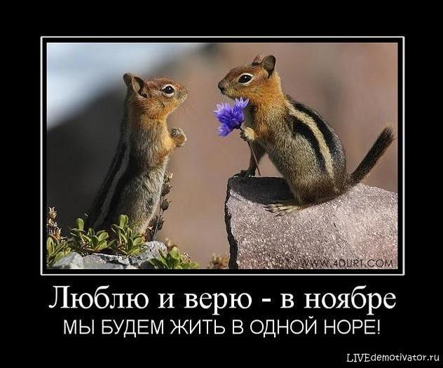 Люблю и верю - в ноябре - МЫ БУДЕМ ЖИТЬ В ОДНОЙ НОРЕ!