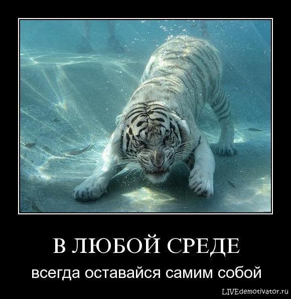 В ЛЮБОЙ СРЕДЕ - всегда оставайся самим собой