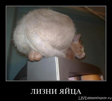 chem-devushkam-nravyatsya-yaichki